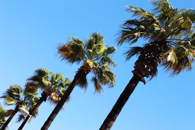 Barcelona Palms