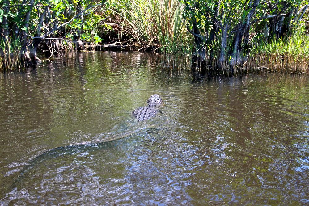 Everglades Miami / http://www.fanfarella.at/g32n