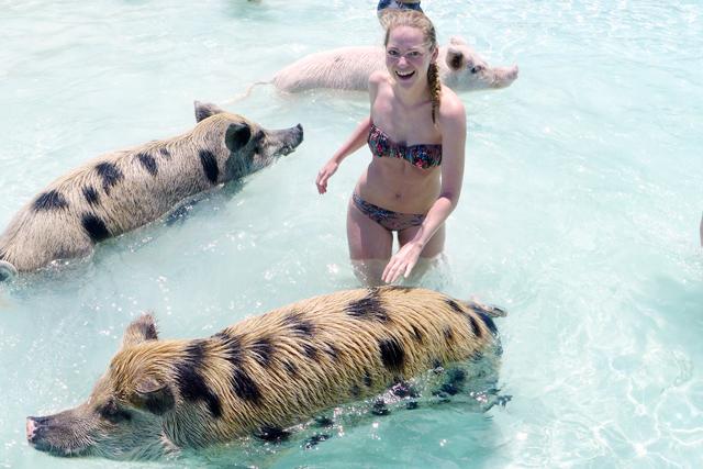 Swimming Pigs, Exumas, Bahamas, Staniel Cay / http://www.fanfarella.at/1mka