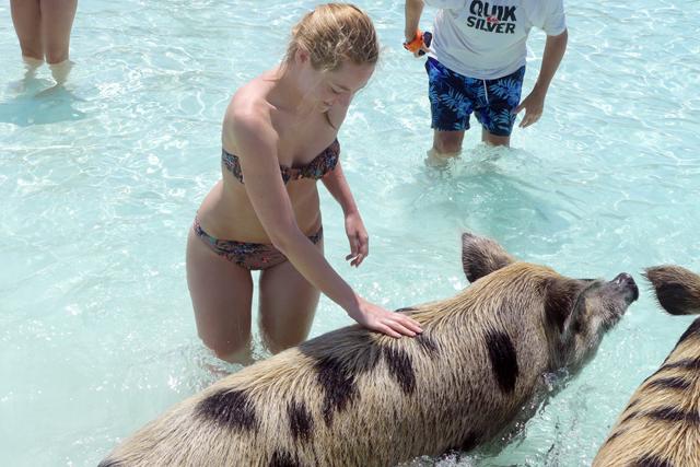 Swimming Pigs, Exumas, Bahamas, Staniel Cay / https://www.fanfarella.at/1mka