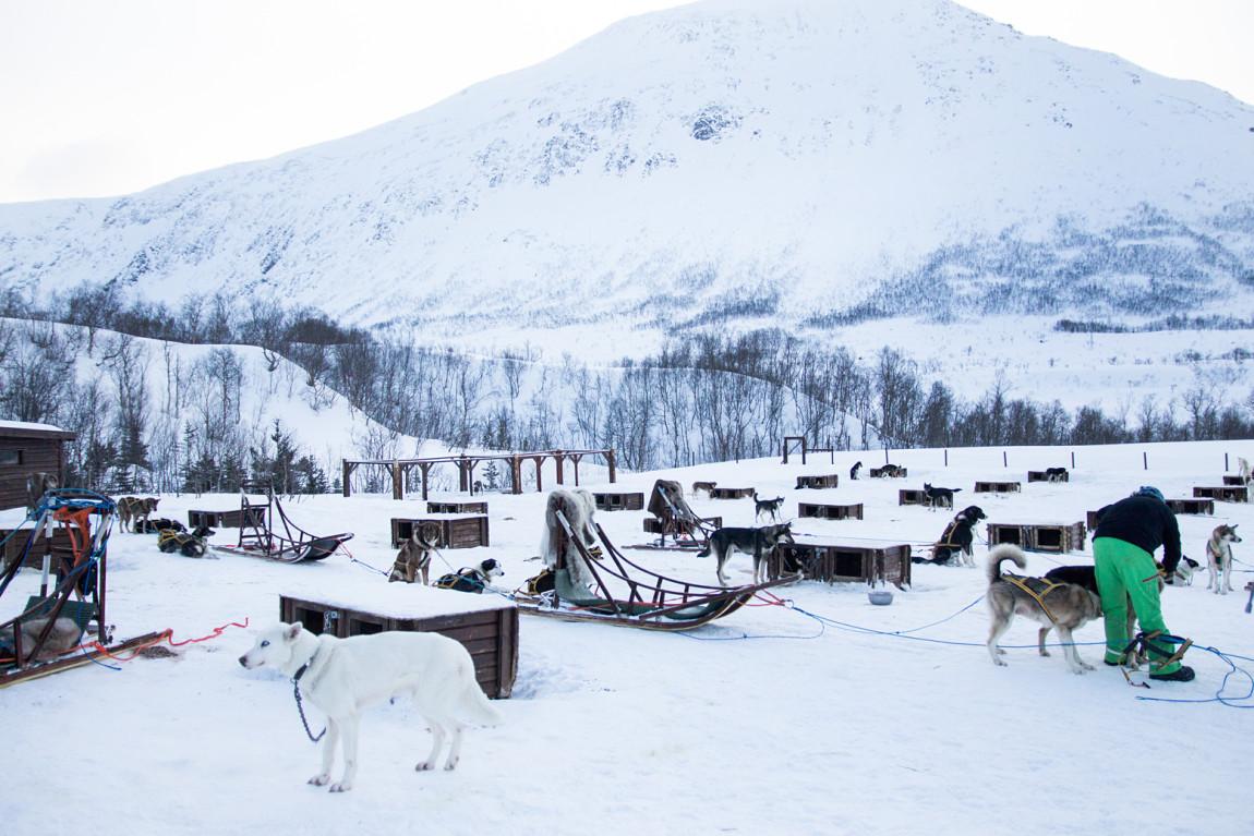 Nord-Norwegen, Hundeschlitten   http://www.fanfarella.at/nord-norwegen-hat-mein-herz-gestohlen