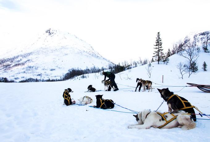 Nord-Norwegen, Hundeschlitten | http://www.fanfarella.at/nord-norwegen-hat-mein-herz-gestohlen