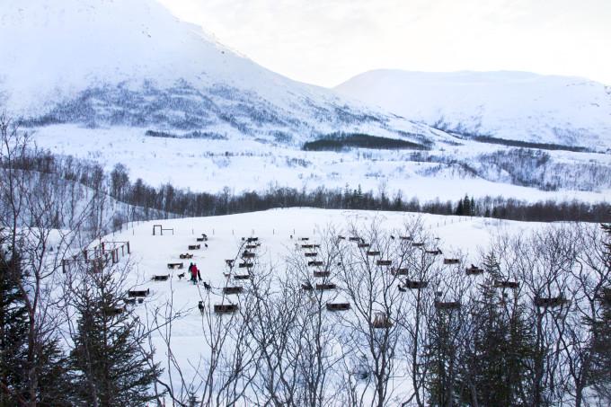 Nord-Norwegen, Hundeschlitten | https://www.fanfarella.at/nord-norwegen-hat-mein-herz-gestohlen